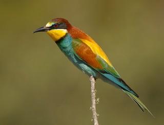 Image result for portugal bird Birdwatching Birdwatching 3  55458